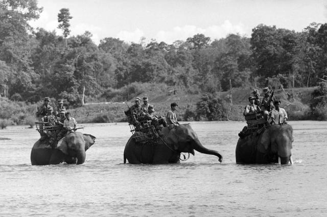 elephanthau