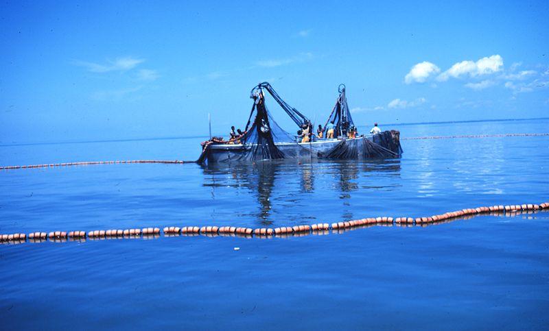 th(au)oniers-senneurs : un sport local (OU Bientôt plein de places dispos dans le port de Sète :)